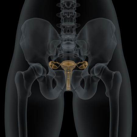 fallopian: Woman body with visible anatomic reproductive organs structure in X-ray