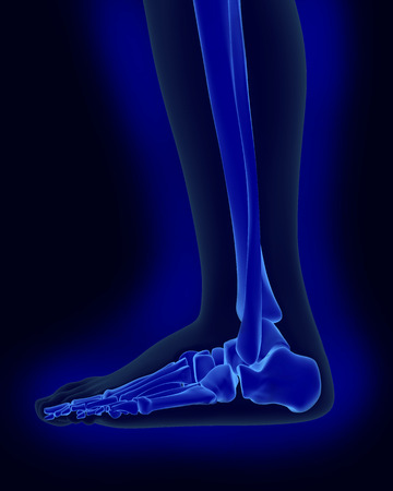 morphology: side x-ray scan view of human foot and ankle render Stock Photo