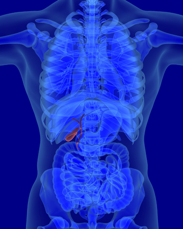digestive organs: anatomy of human biliary system with digestive organs in x-ray view Stock Photo