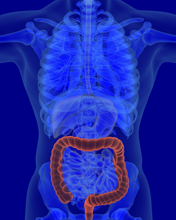 digestive organs: anatomy of human colon with digestive organs in x-ray view Stock Photo