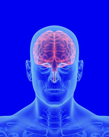 보이는 두뇌 전면보기와 인체의 x- 선 검사