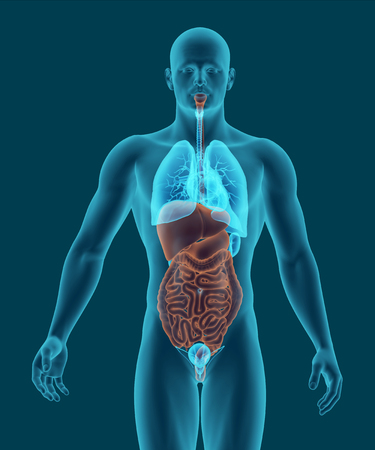 Human Body With Digestive System Internal Organs In X-ray View ...