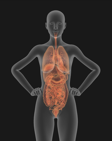 X-ray picture of a woman with a visible internal organs 3d render