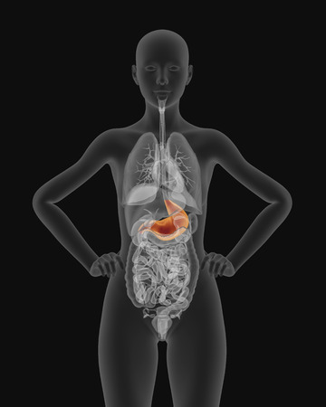 jejunum: X-ray picture of woman stomach visible 3d illustration render Stock Photo