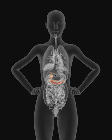 pancreas: anatomy of woman gallbladder and pancreas with digestive organs in x-ray view 3d illustration Stock Photo