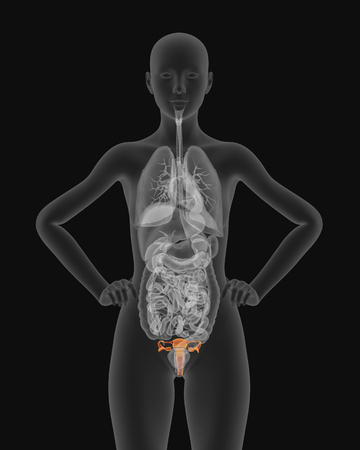 visible: Woman body with visible anatomic reproductive organs structure in X-ray 3d render