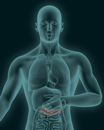 digestive organs: anatomy of human inflamed pancreas with digestive organs in x-ray view