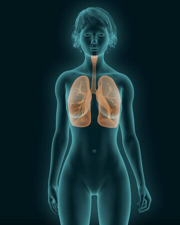 Woman body x-ray scan with visible respiratory system 3d render