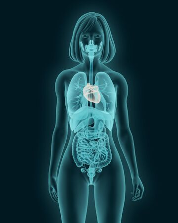 X-ray of man with a visible heart and internal organs 3d illustration