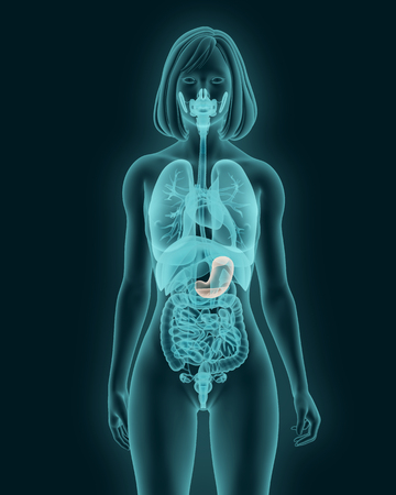 X-ray picture of woman stomach visible 3d illustration render Stock Photo