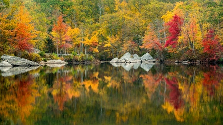 Colorful Autumn Trees Reflected in a Small Pond