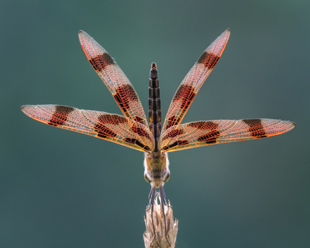 Halloween Pennant in Obelisk Posture From Below and Behind Stock Photo - 89307824