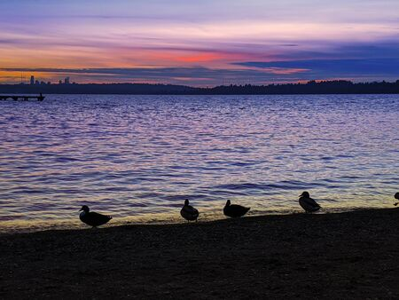 Ducks and seagulls in silhouette in front of a bright, colorful sunset on Lake Washington, looking out at Seattle nightlife starting up. 版權商用圖片