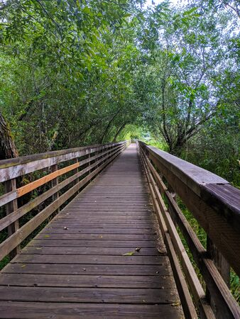 Wooden walking bridge in swampy wetlands after a light rainfall in summer