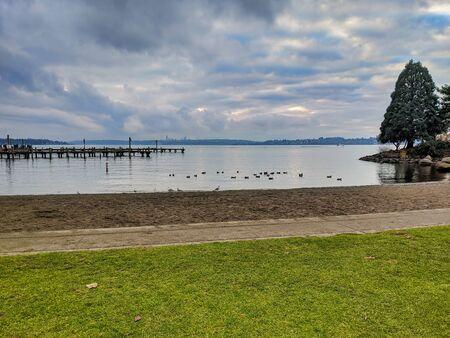 Seagulls and ducks walking along the sandy beach of Lake Washington near the boat docks.