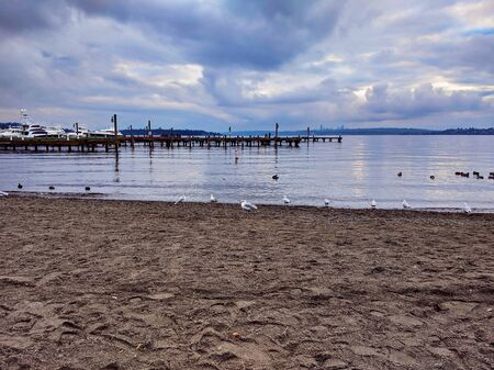 Seagulls and ducks on the beach of Lake Washington near the boat docks 스톡 콘텐츠
