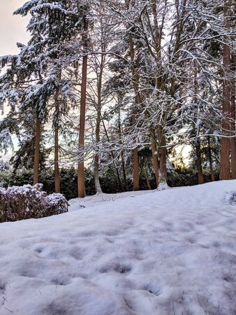 Beautiful sunset after a snow storm deep in the pacific northwest woodlands 스톡 콘텐츠