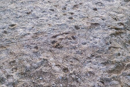 Wildlife prints, such as ducks and deer, in the sand at Lake Washington in the Pacific Northwest.