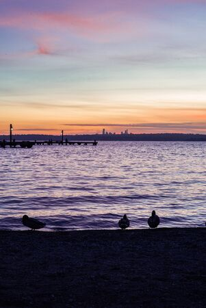 Ducks and seagulls in silhouette in front of a bright, colorful sunset on Lake Washington, looking out at Seattle nightlife starting up. 스톡 콘텐츠