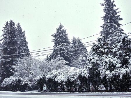 Tall evergreen trees covered in fluffy snow towering behind power lines near an icy road in the pacific northwest 스톡 콘텐츠