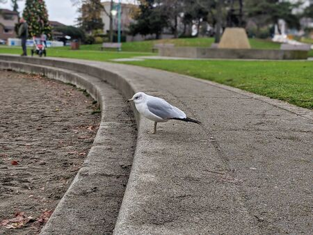 A chubby sea gull stands on the edges of stairs leading down to a sandy beach at Lake Washington, looking out for food