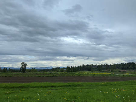 View of a wide, open farmland with rows of crops in Northern Washington on an overcast day