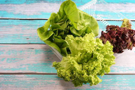 Green and red leaf lettuce on plastic container. Fresh ingredient for making healthy salad and sandwiches