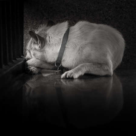 Lonely sleeping dog in Black and white tone Banco de Imagens