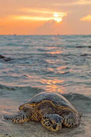 Een zee-turle rust op het strand bij zons ondergang