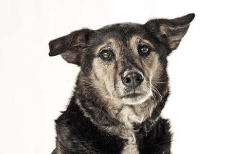 shephard: Salvataggio del cane triste Archivio Fotografico