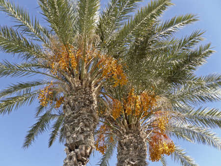 Looking at a tall palm tree photo