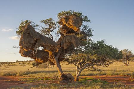 美しいシステムランドス ケープ カラハリ砂漠ナミビア 写真素材