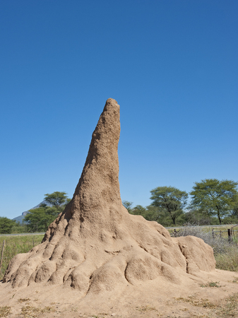 Termite mound or termite hill in Namibia, Africa