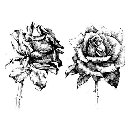 Roze inkt tekening bloem illustratie.