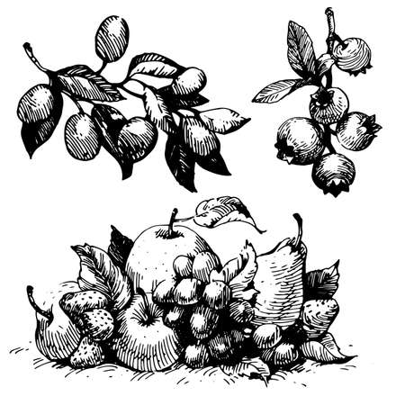 Fruit apple, pear, berries, strawberry black Ink drawing illustration.