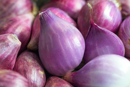 Vers schil sjalot of kleine rode ui onder ruwe één, ongepeld. Sjalotten zijn uitvoerig gekweekt voor het is een belangrijk ingrediënt in Zuidoost-Azië gerechten zoals augurk, gefrituurd of als specerij. Allium cepa var. aggregatum Stockfoto