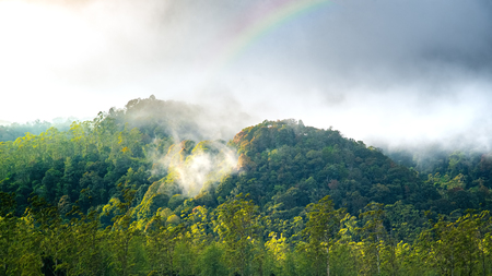 Cloud Forest with Rainbow on The Top Of it. Mountain Hill Forest on Autumn. Silvagenitus Cloud Develops Locally Over Forests Due To Increase Humidity and Evaporation From the Tree Canopy