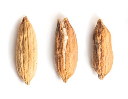 Three Kapok Seed Pods on White Background. Middle Kapok Seed Pod Crack Open Showing its Silky Fibre. Ceiba pentandra seeds. Standard-Bild - 123491091