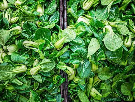 Green Baby Bok Choy or Known as Chinese Cabbage. Standard-Bild