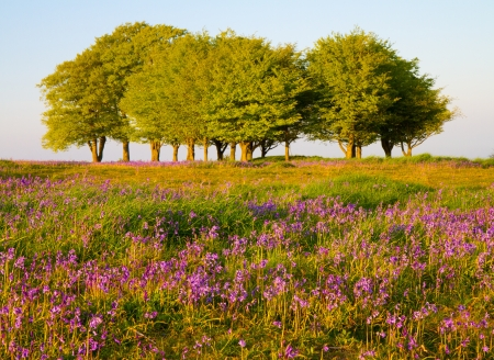 Beech trees and bluebells on the Quantock Hills Stock Photo - 13785665
