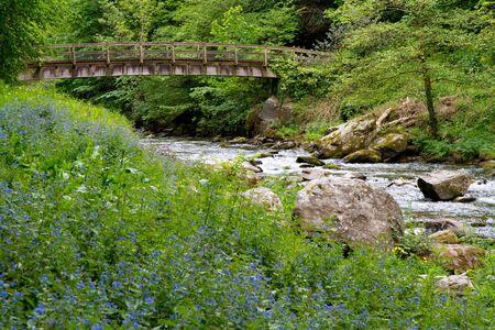 watersmeet: Bluebells at Watersmeet near Lynmouth Devon Stock Photo
