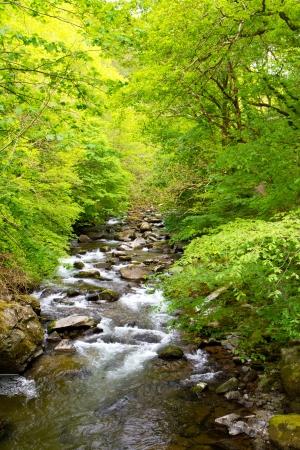 watersmeet: The walk from Lynmouth to Watersmeet Devon