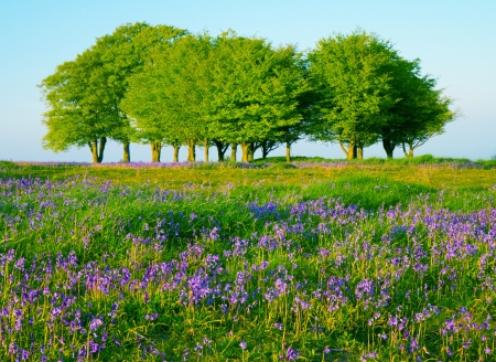 Beech trees and bluebells on the Quantock Hills, Somerset Stock Photo - 14571906