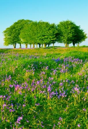 buche: Buchen und Glockenblumen auf der Quantock Hills, Somerset Lizenzfreie Bilder