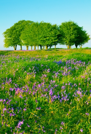 Beech trees and bluebells on the Quantock Hills, Somerset Banque d'images
