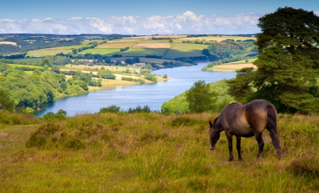 Exmoor pony at Wimbleball Lake Exmoor National Park Somerset photo