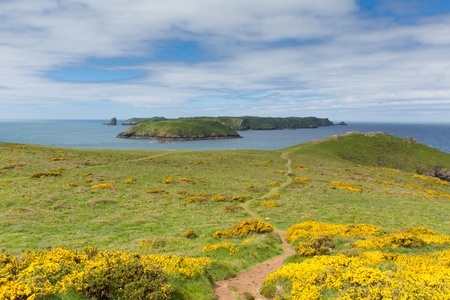 ynys: Skomer Island Pembrokeshire West Wales known for Puffins, wildlife and a National Nature Reserve