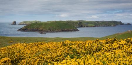 skomer island: Skomer Island Pembrokeshire