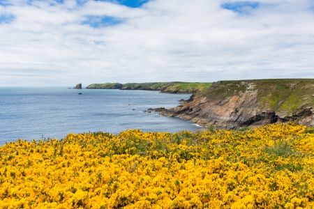 Wales coastal scene towards Skomer Island Pembrokeshire, area known for Puffins, wildlife and a National Nature Reserve