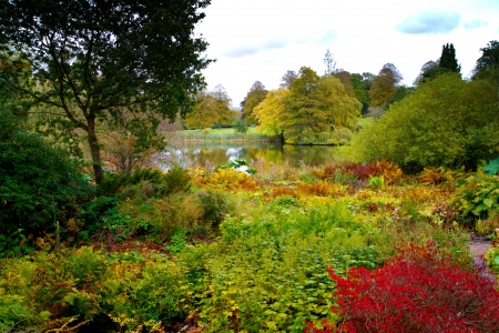 english garden: Beautiful vibrant and colourful autumn flowers in and English garden